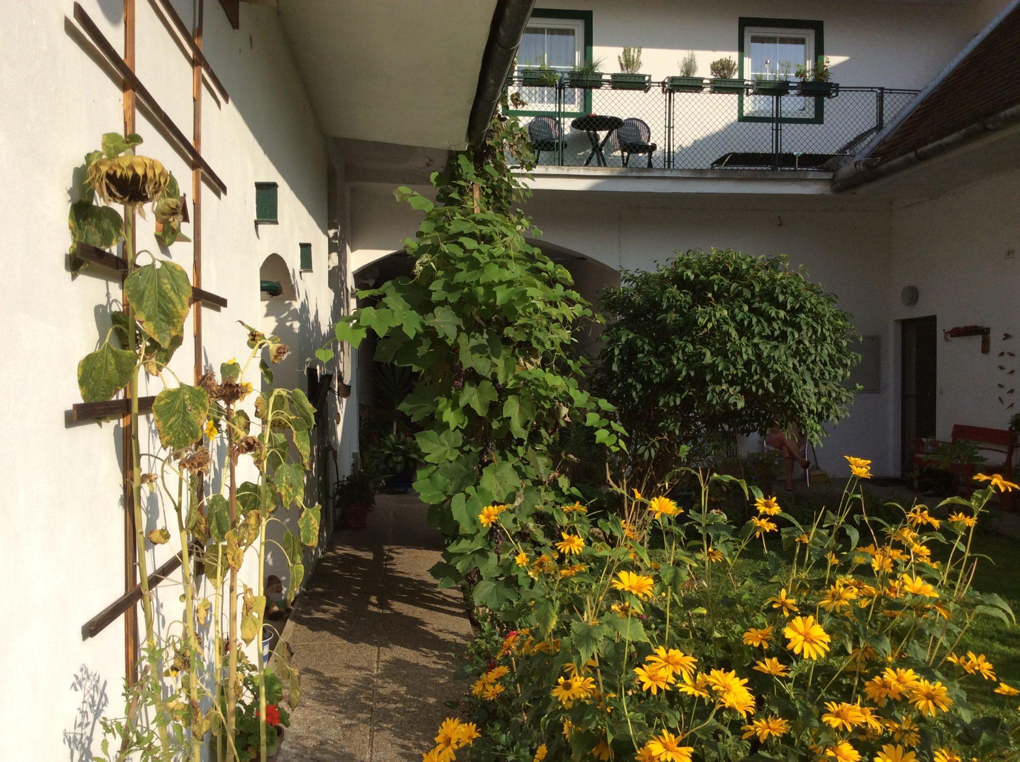 Innenhof-Garten